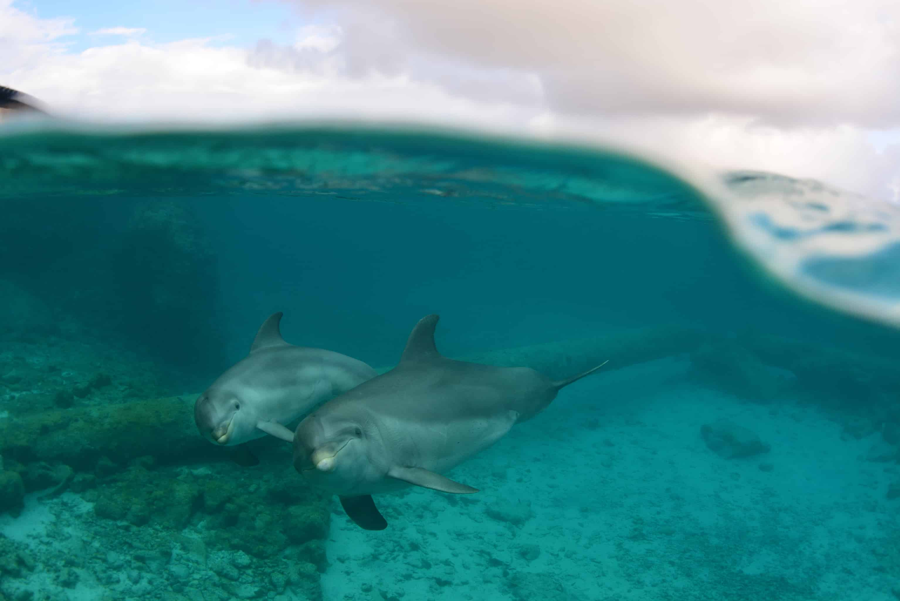 Curaçao Dolphin Experiences Dolphin Academy Roxette & Luna