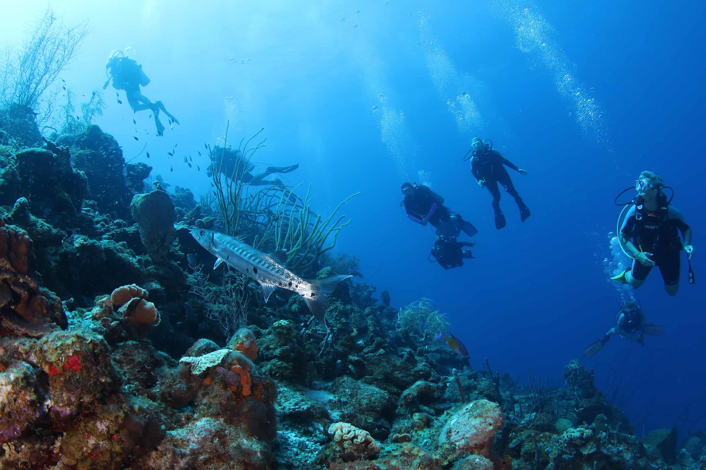 PADI Diving Curacao Refresh 4