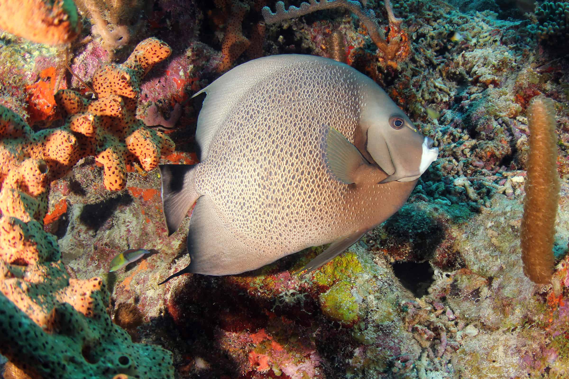 Diving Curacao 3