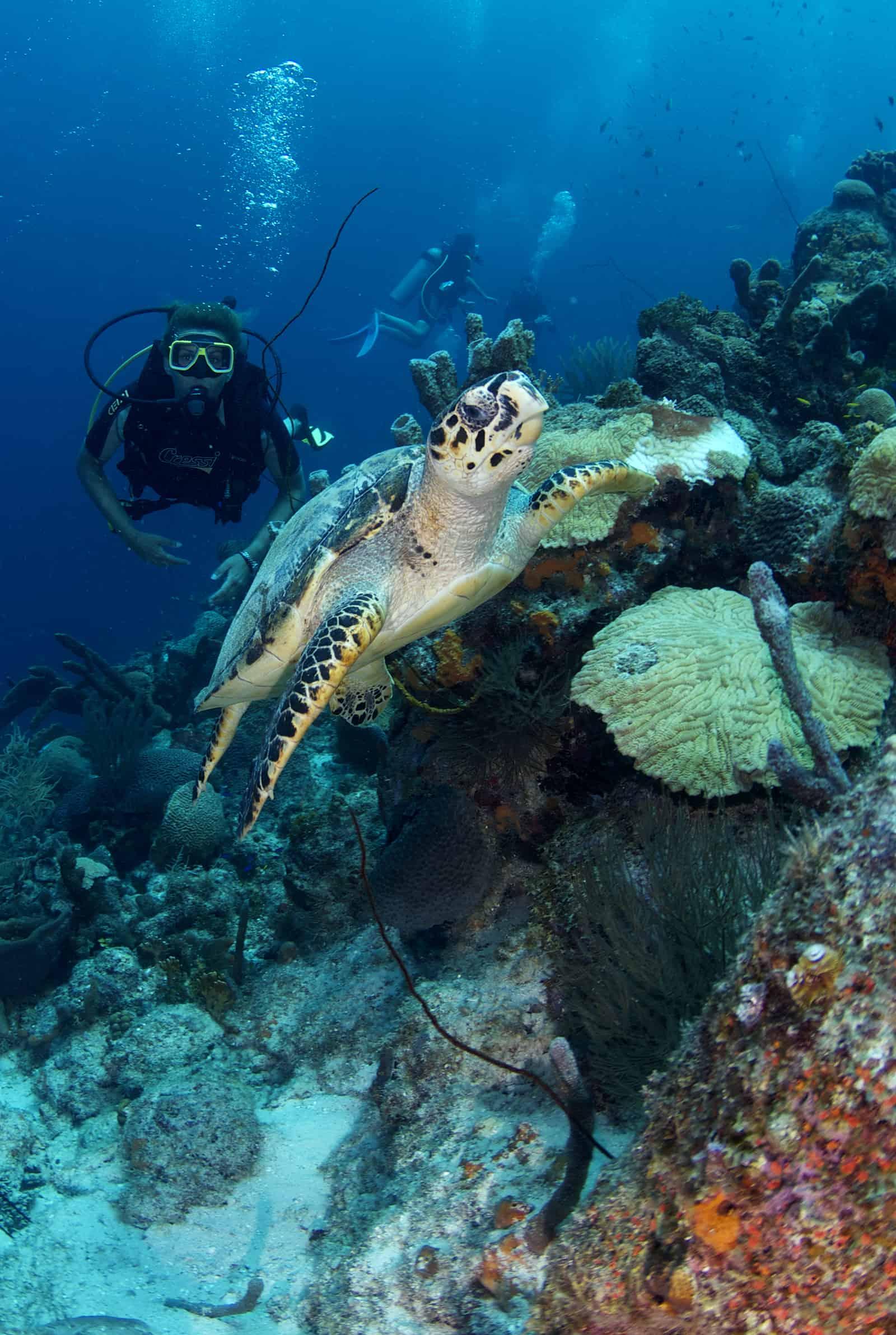PADI Diving Curacao Refresh 5