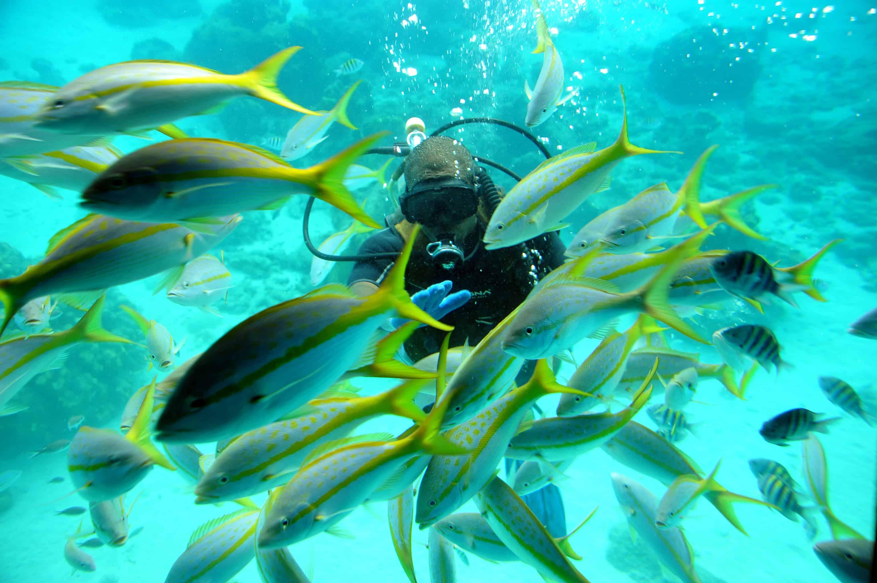 Seaworld Explorer Curacao 1