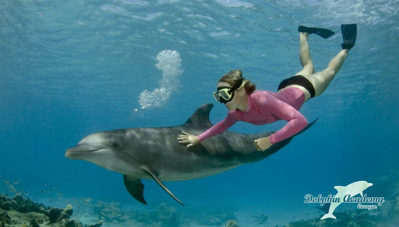 Swim with Dolphins Curacao Dolphin Free Dive 1