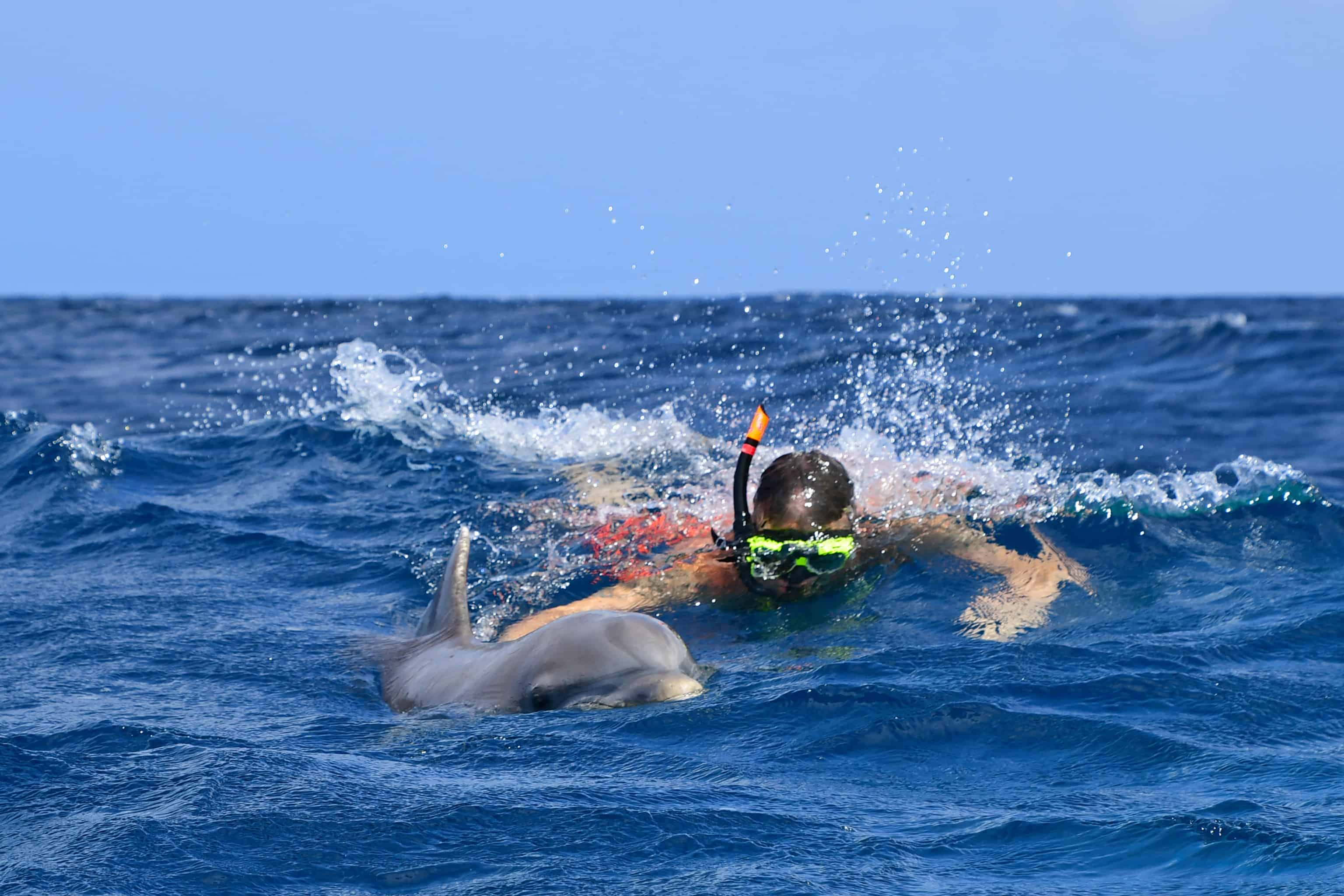 Swim with Dolphins Curacao Dolphin Free Dive 2