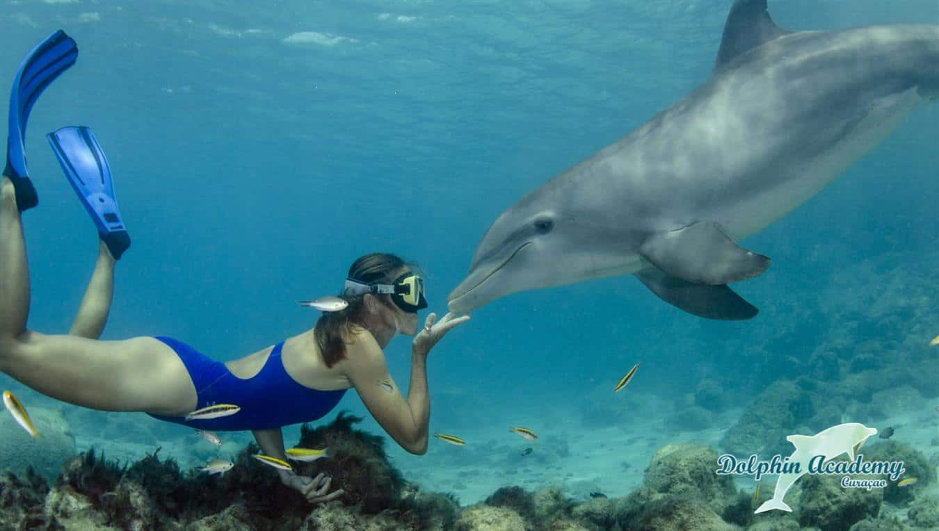 Swim with Dolphins Curacao Dolphin Free Dive