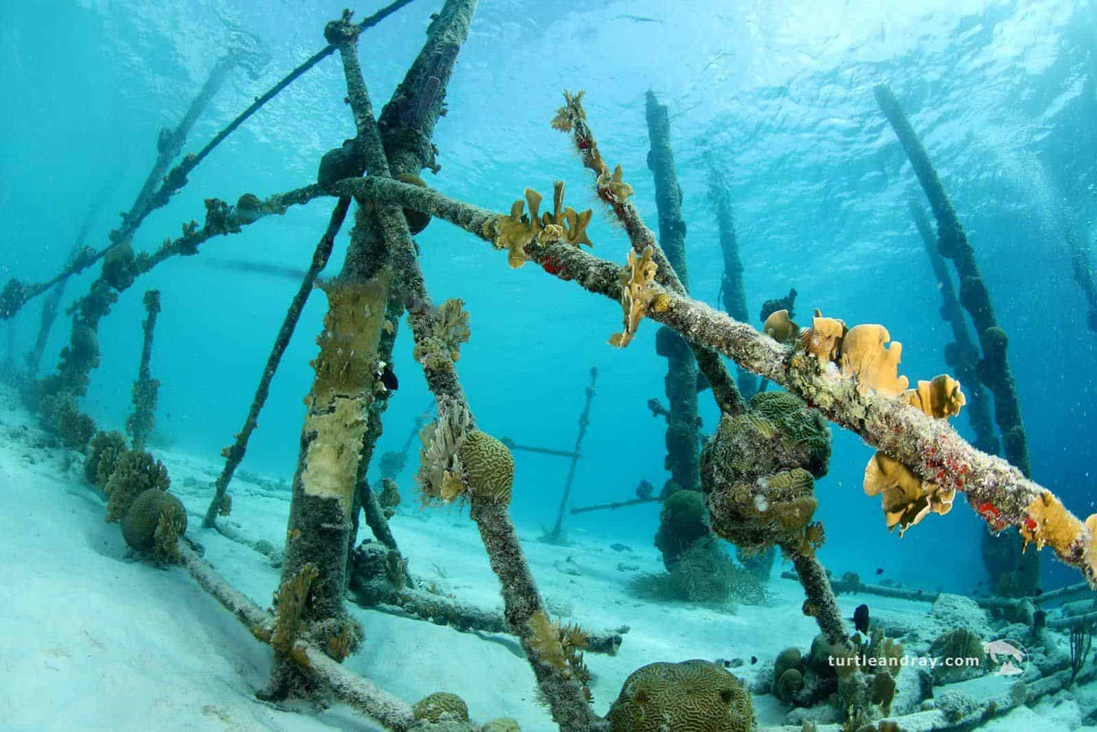 Diving Curacao 1