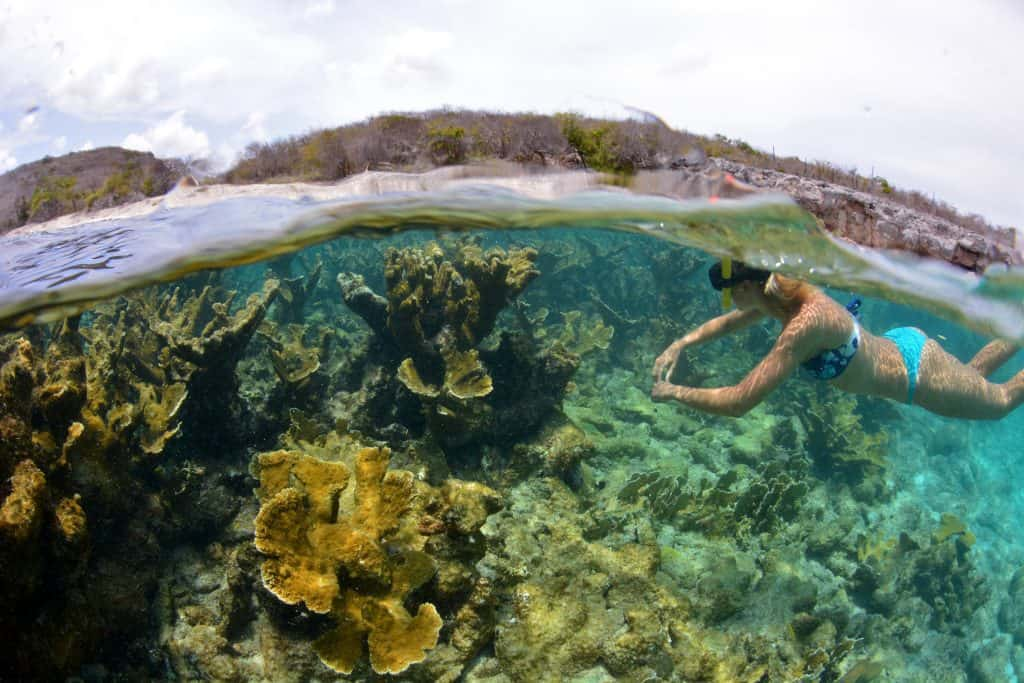 BlueFinn West Coast Snorkeling Sailing Curacao