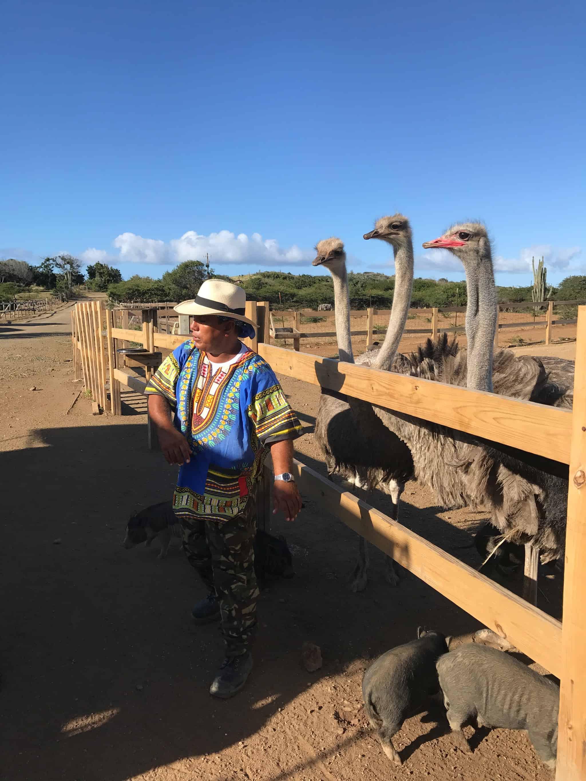 Aloe Vera Plantation and Ostrich Farm 3