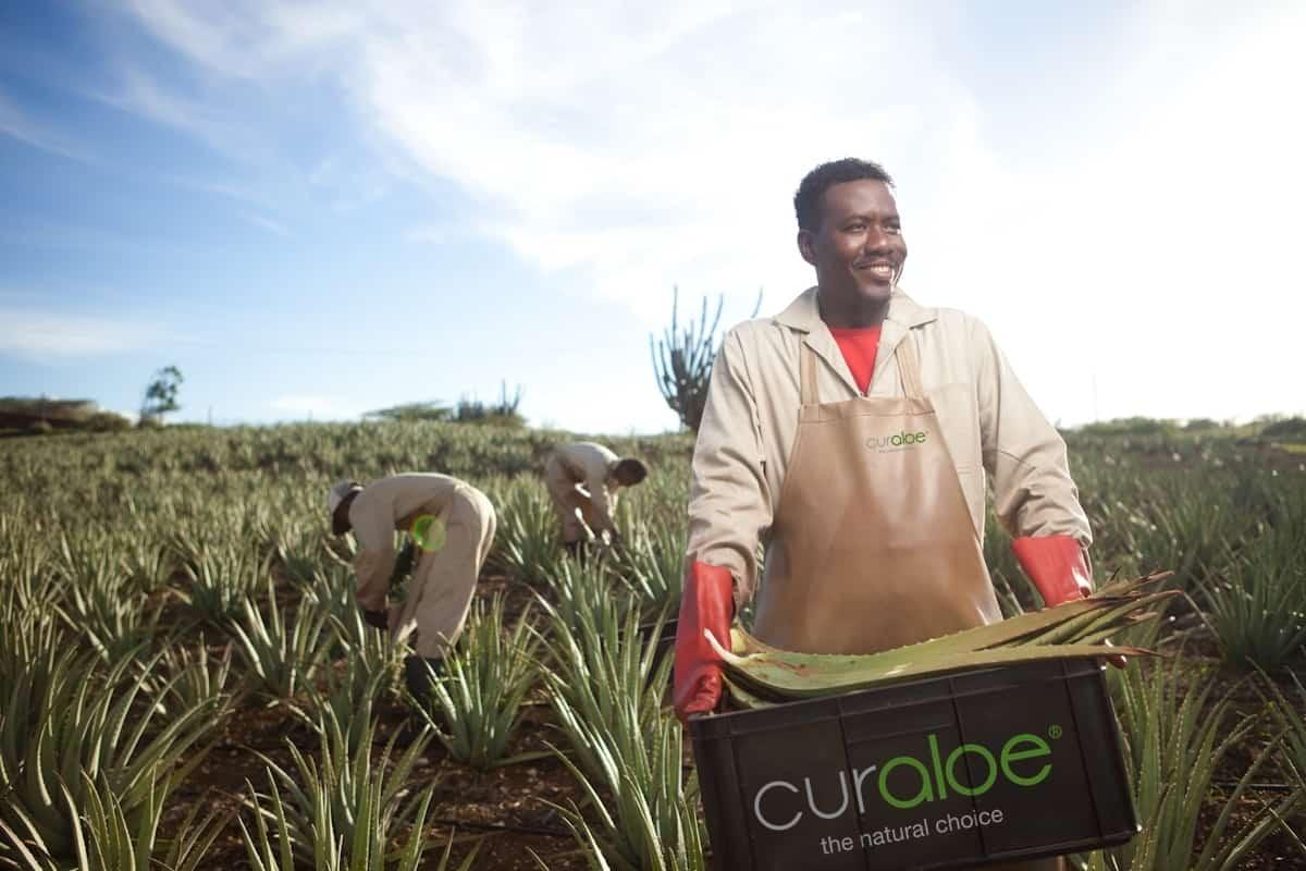 Aloe Vera Plantation and Ostrich Farm 1