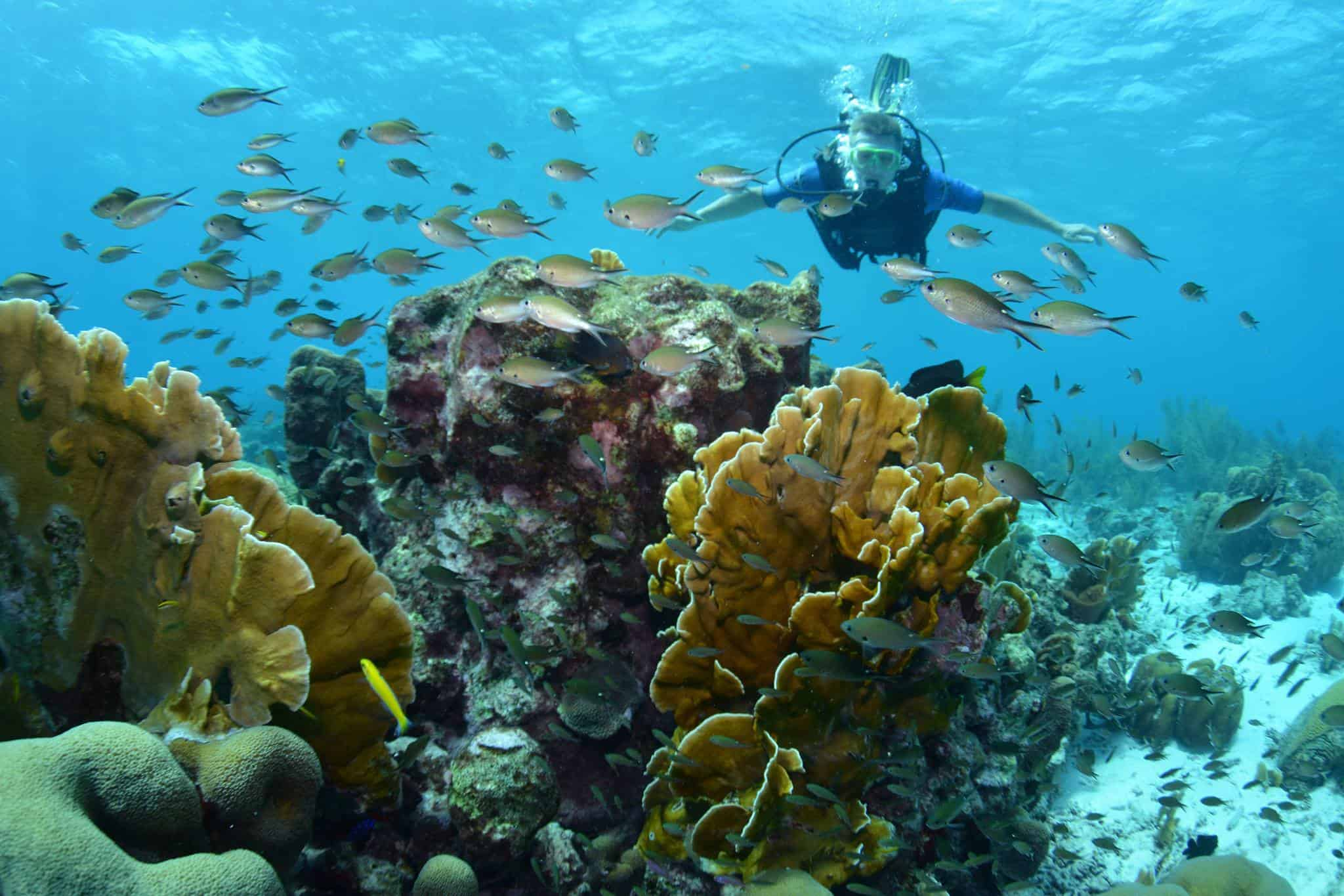 Diving Curacao 2