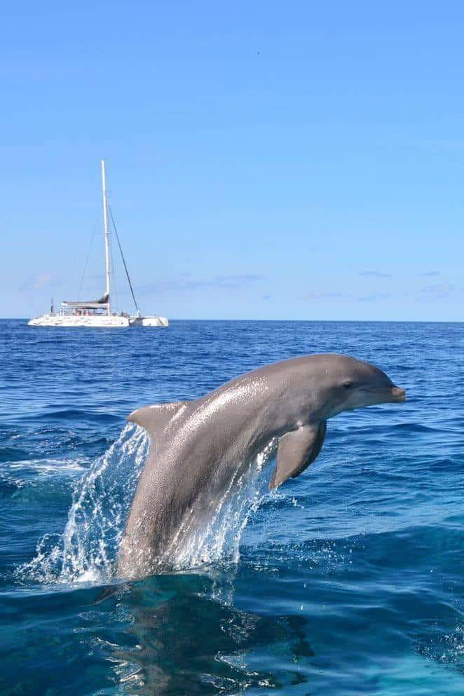 Catamaran BlueFinn Curacao Snorkeling Dolphins 1