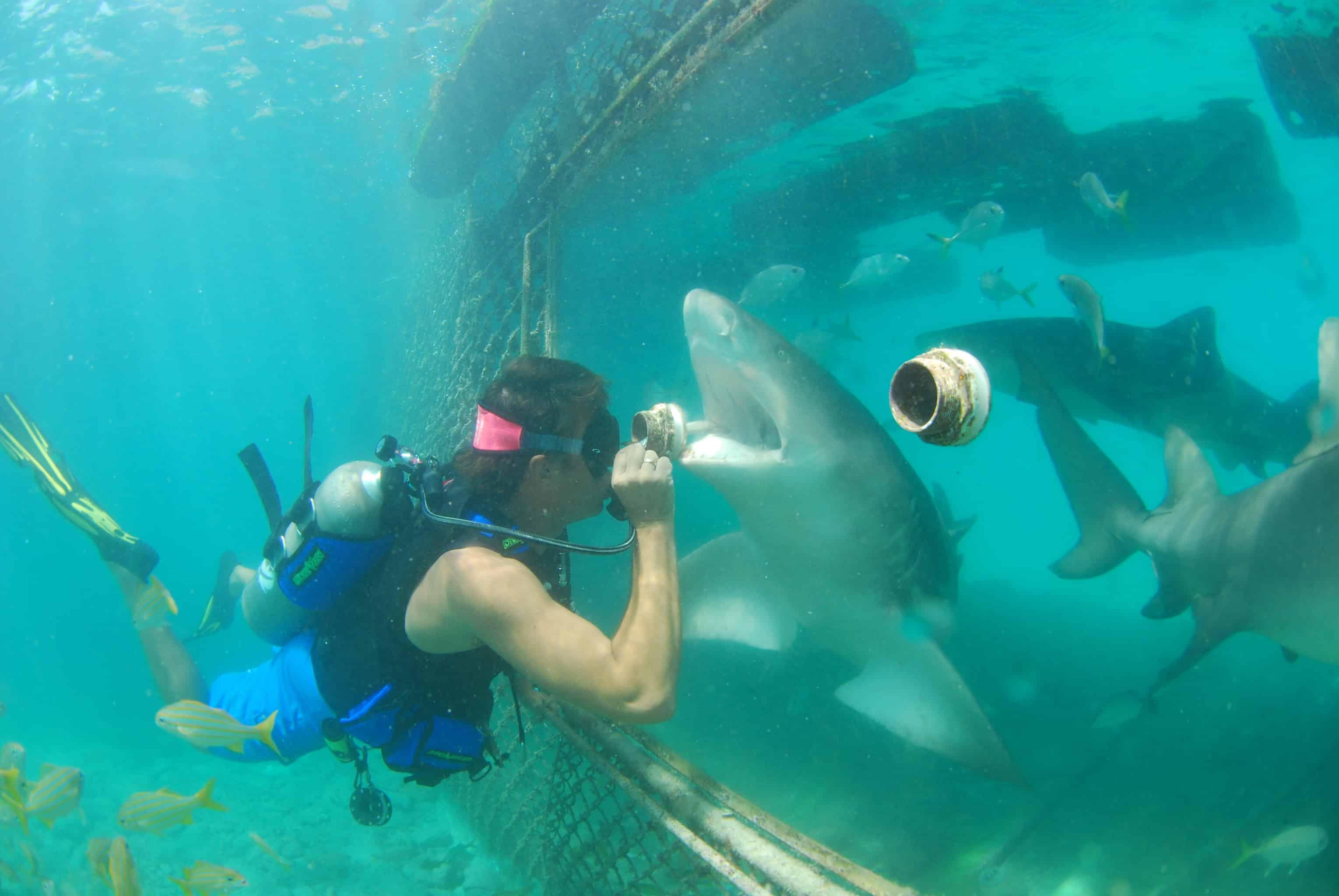 Animal Encounter Sea Aquarium Curacao