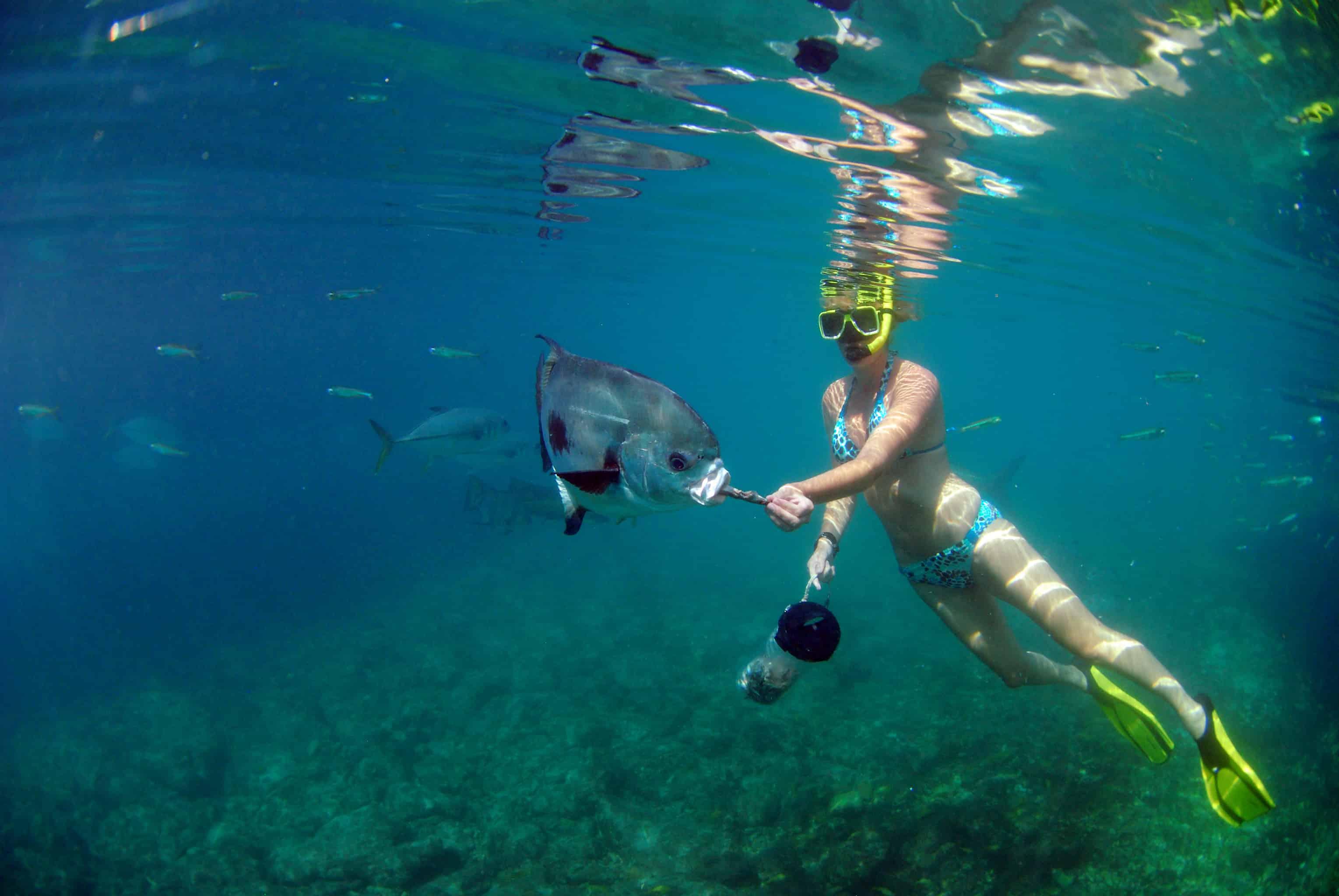 Animal Encounter Curacao Snorkeling 1