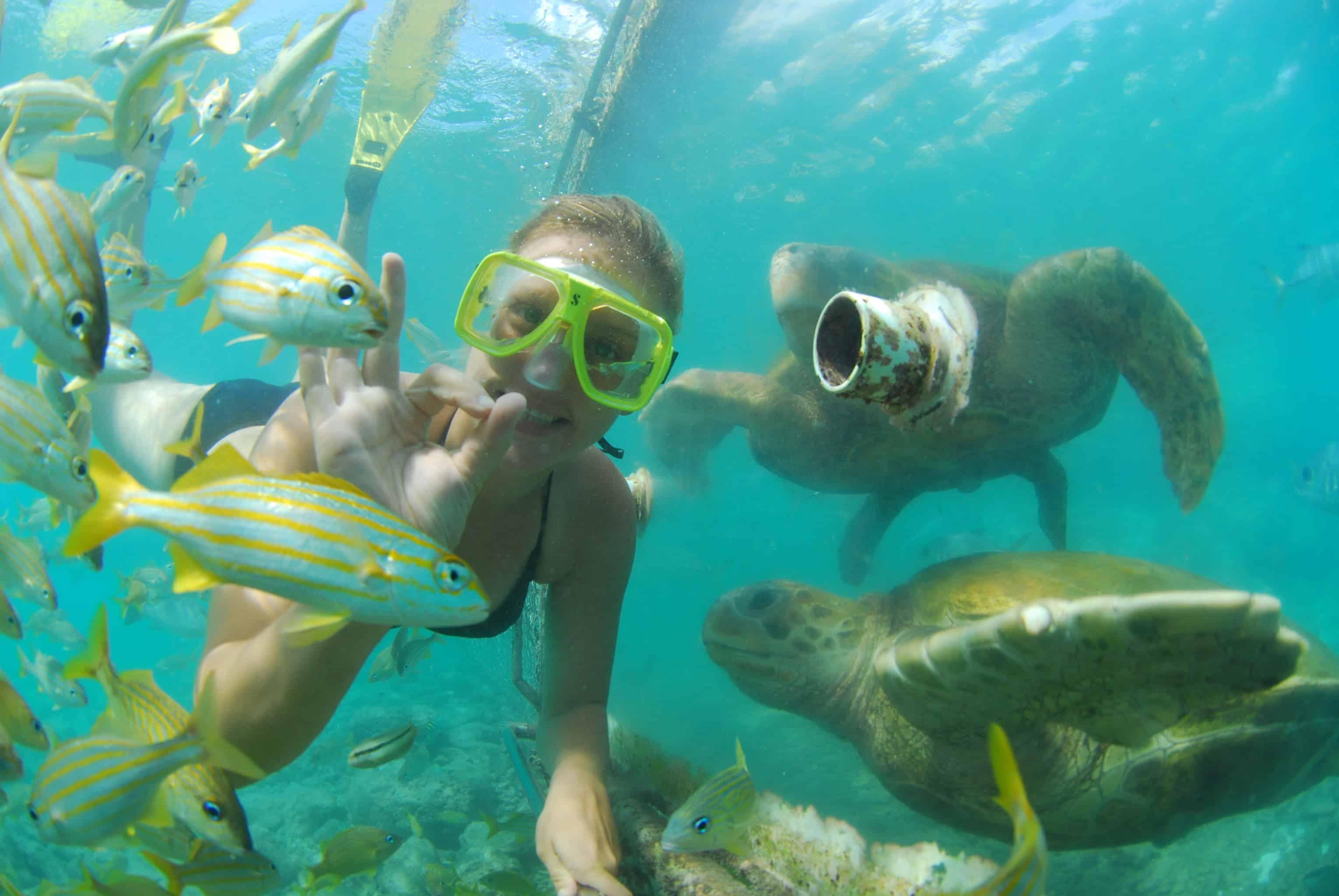 Animal Encounter Curacao Snorkeling 7