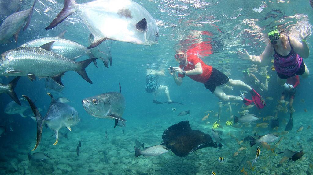 Animal Encounter Curacao Snorkeling 6