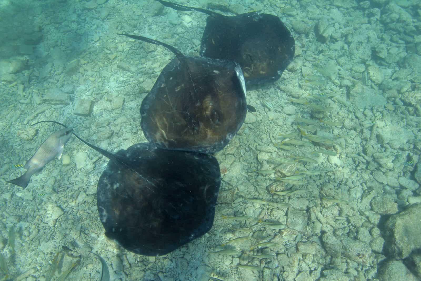 Animal Encounter Sea Aquarium Curacao 2