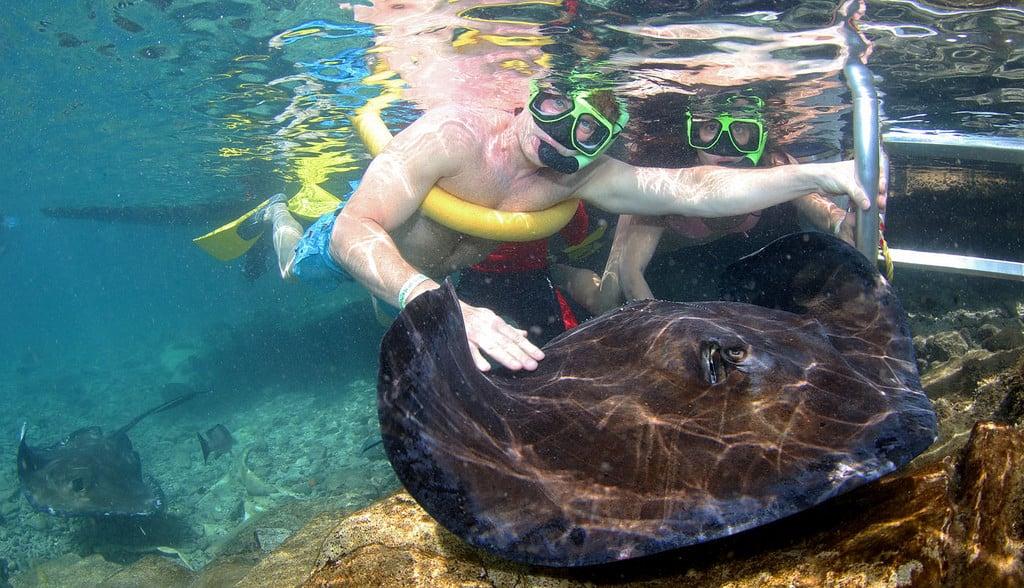 Animal Encounter Curacao Snorkeling 5