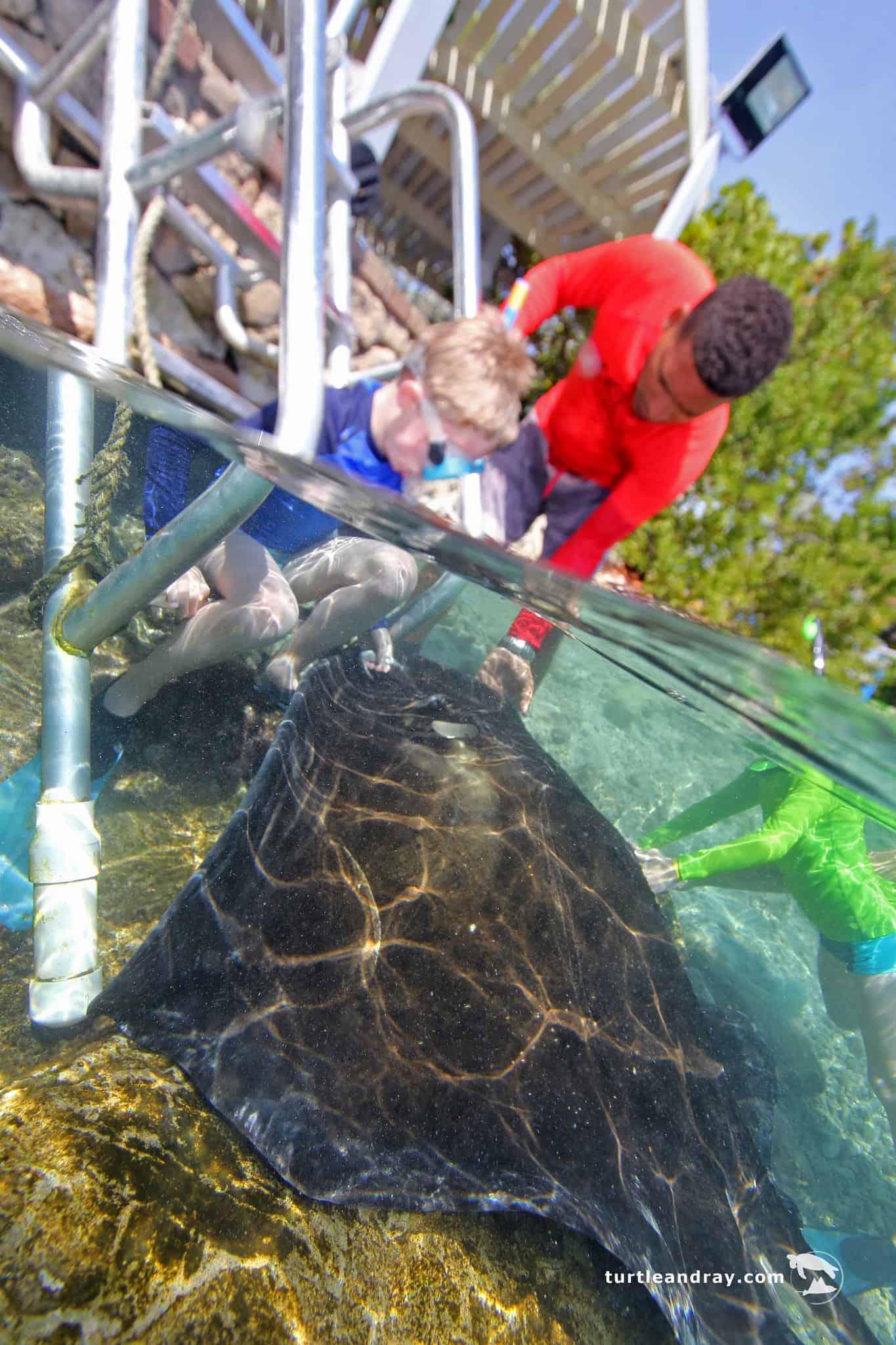 Animal Encounter Curacao Snorkeling 3