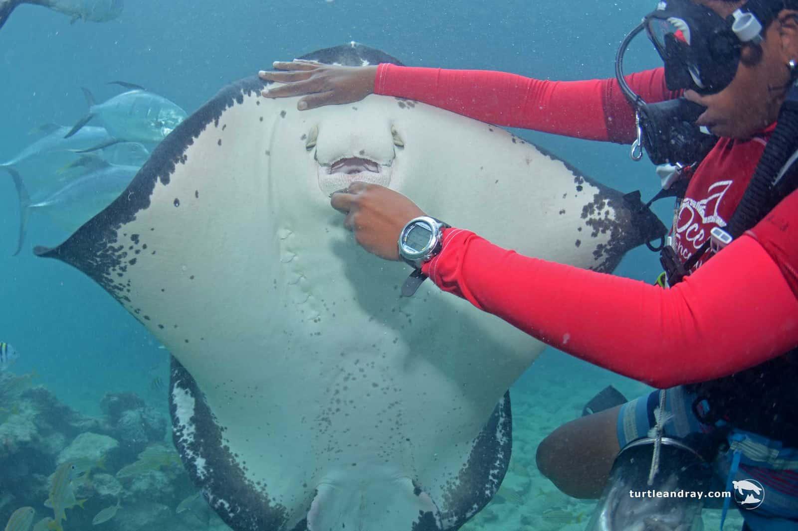 Animal Encounter Sea Aquarium Curacao 4