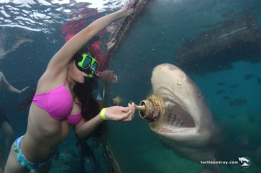Animal Encounter Curacao Snorkeling 2