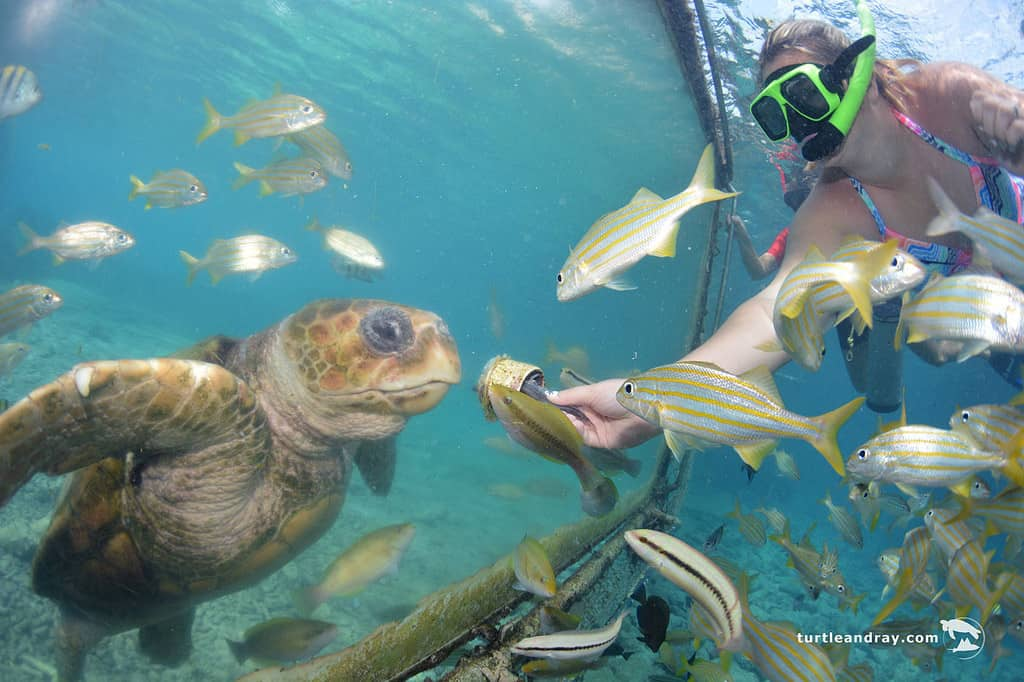 Animal Encounter Curacao Snorkeling