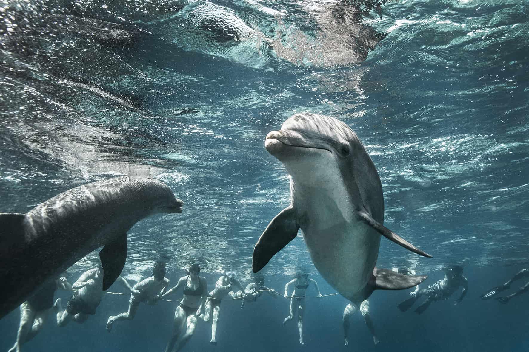 Catamaran BlueFinn Curacao Snorkeling Swim with Dolphins