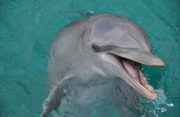 Dolphin Swim Curaçao Ritiña