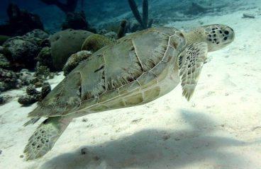 PADI-Diving-Curacao-16
