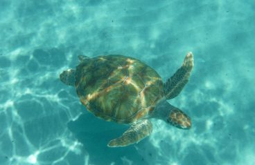 Curacao Snorkeling Playa Piskado 1