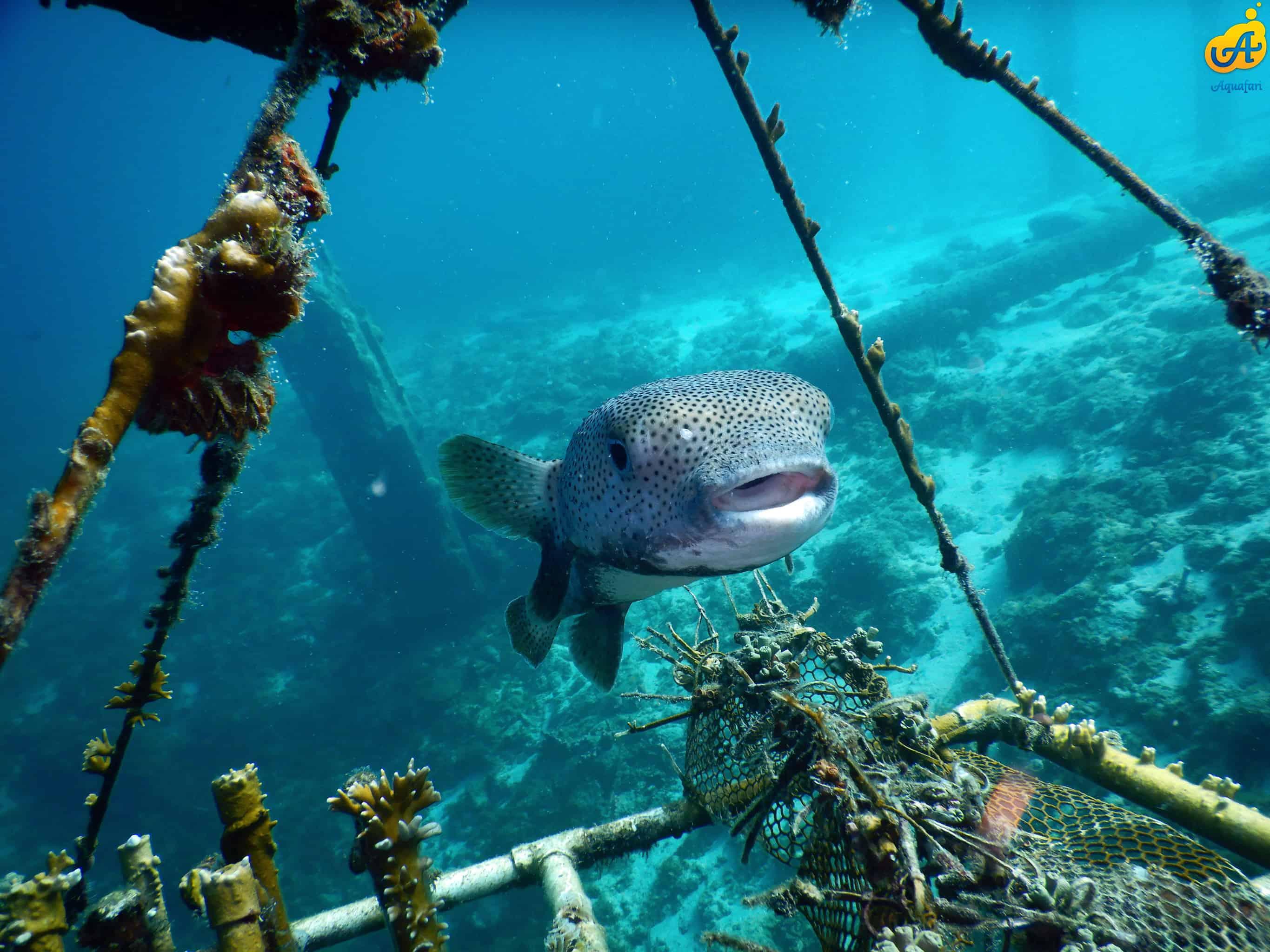 Aquafari Curaçao 5