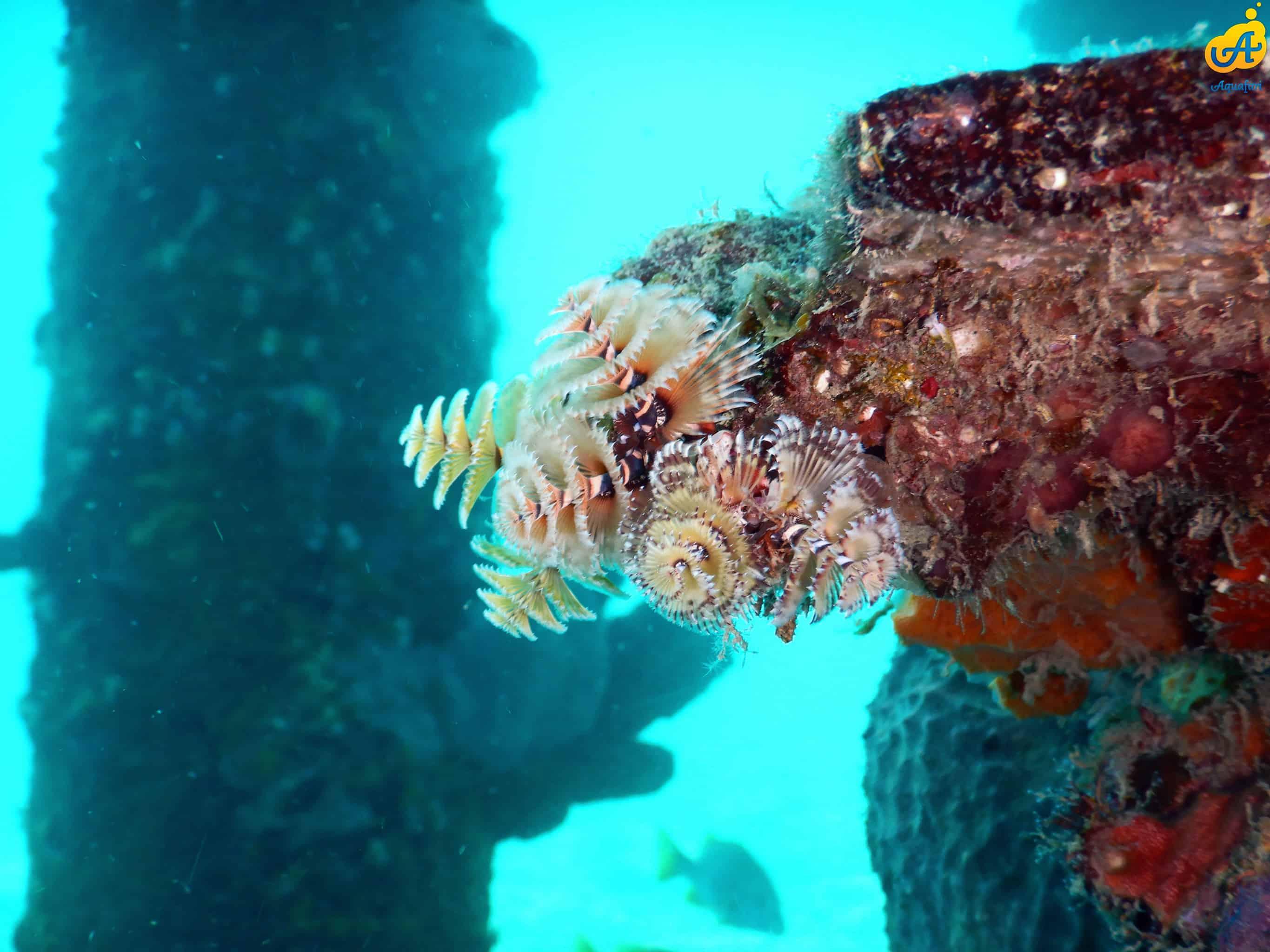 Aquafari Curaçao 6