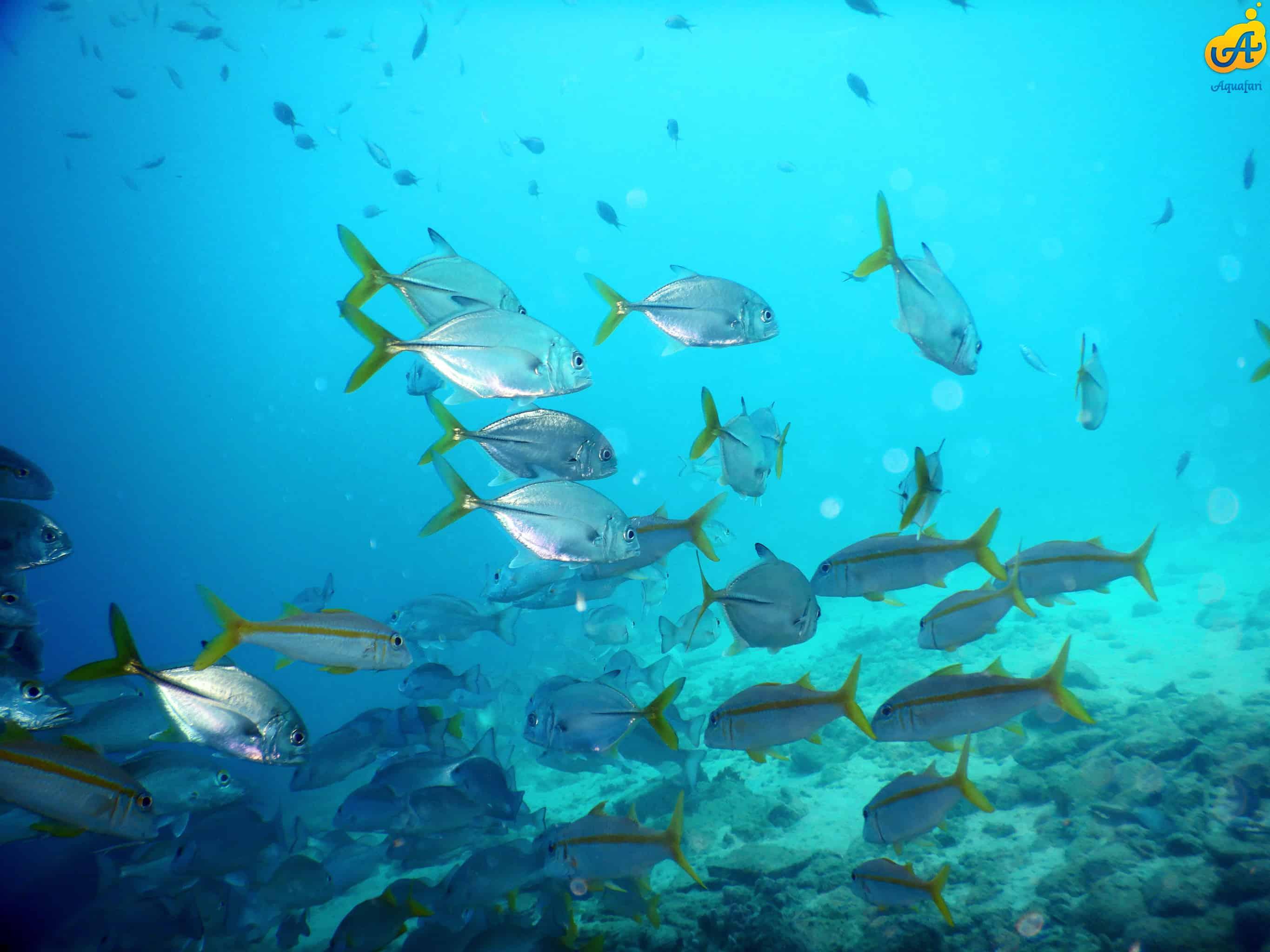 Aquafari Curaçao 7