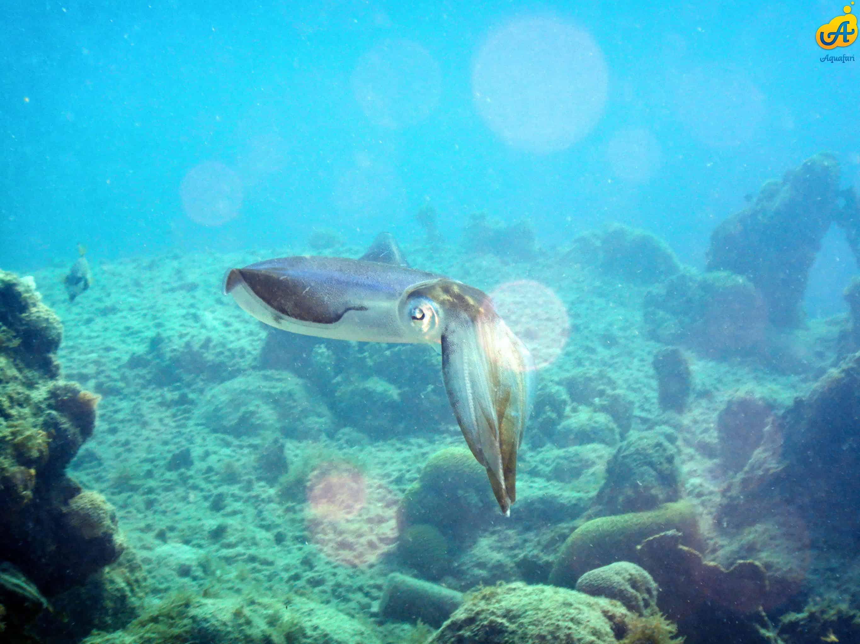Aquafari Curaçao 8