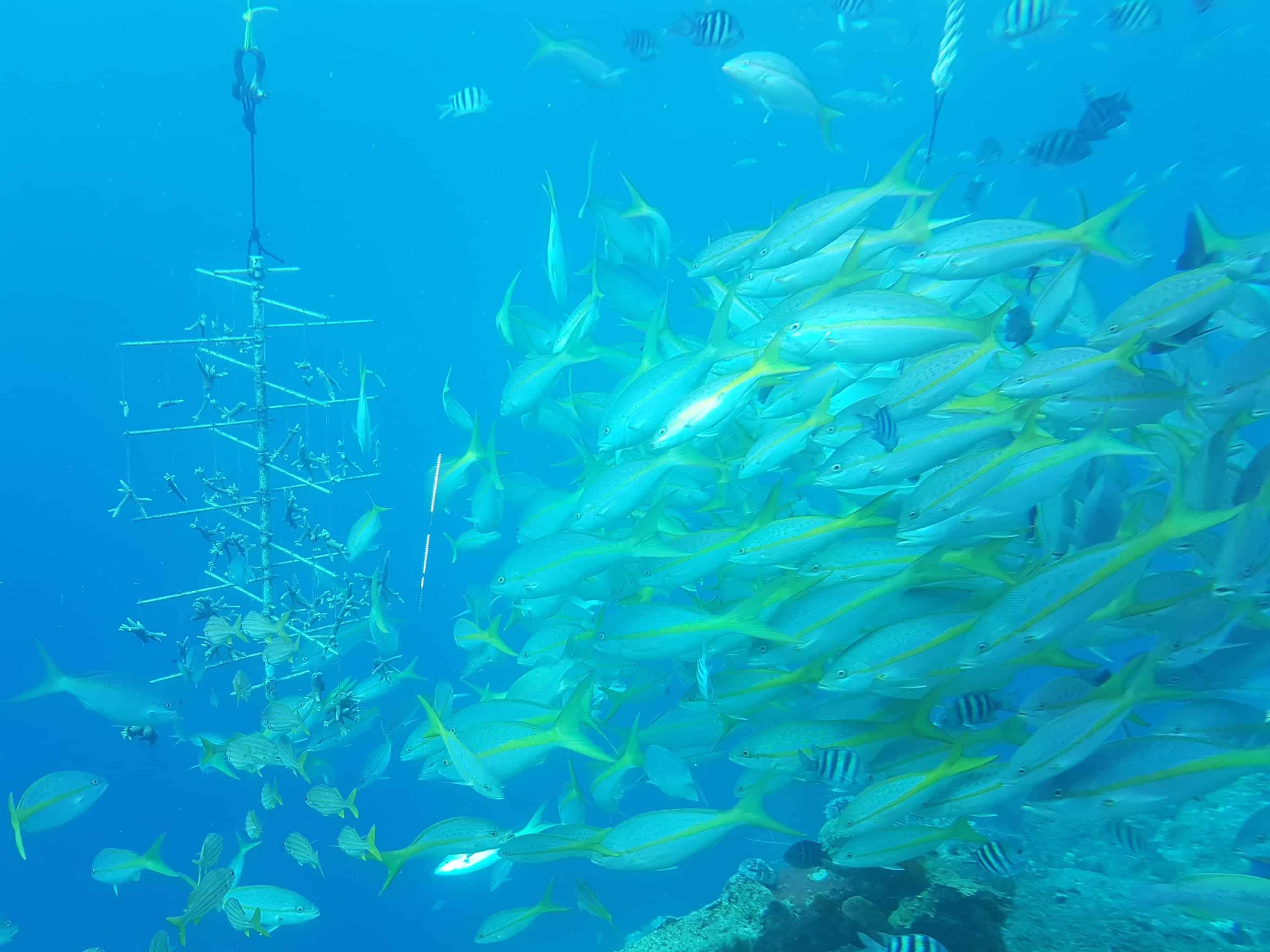 Curaçao Sea Aquarium Ocean Lens 3