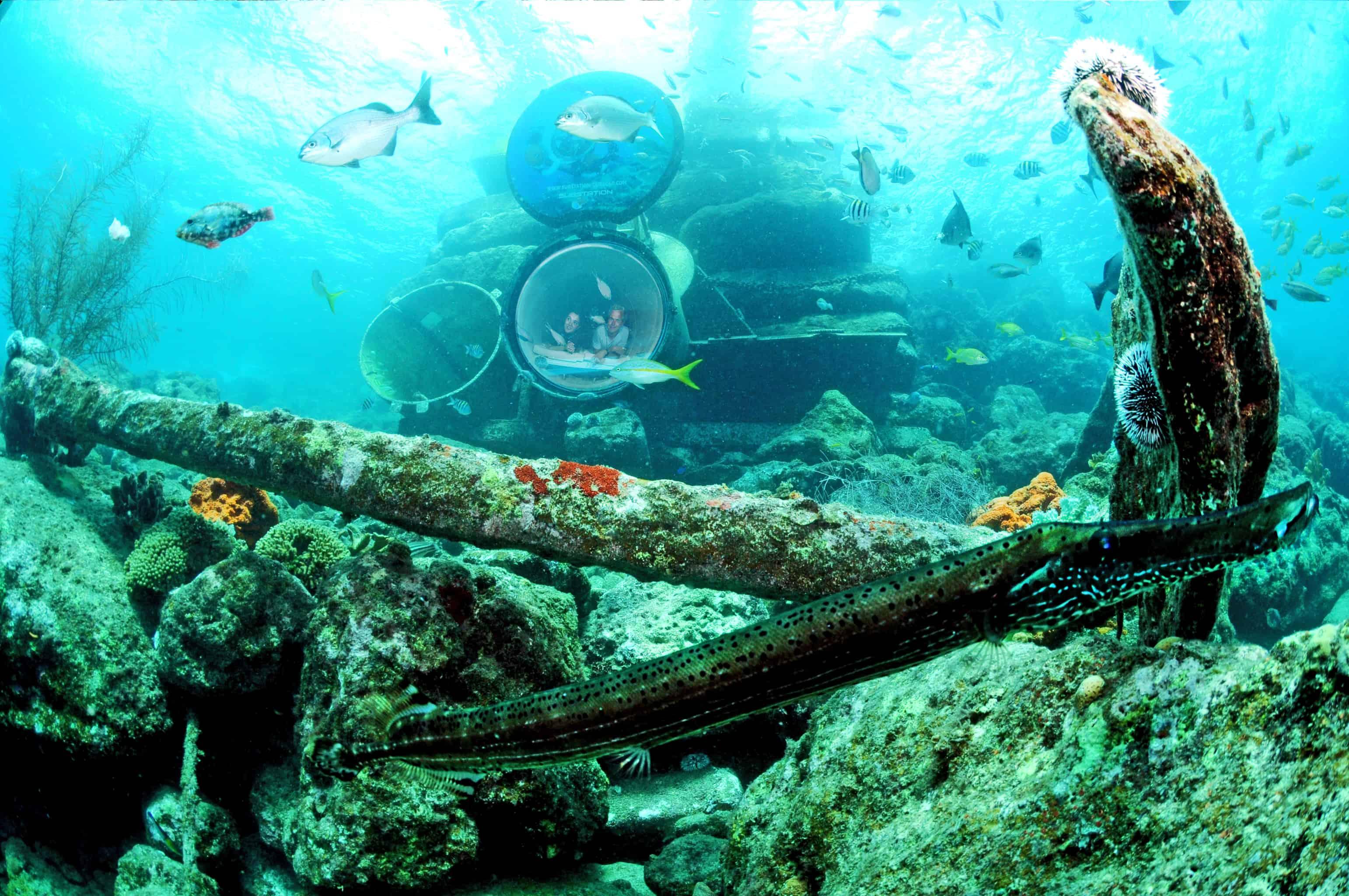 Curaçao Sea Aquarium Ocean Lens 6