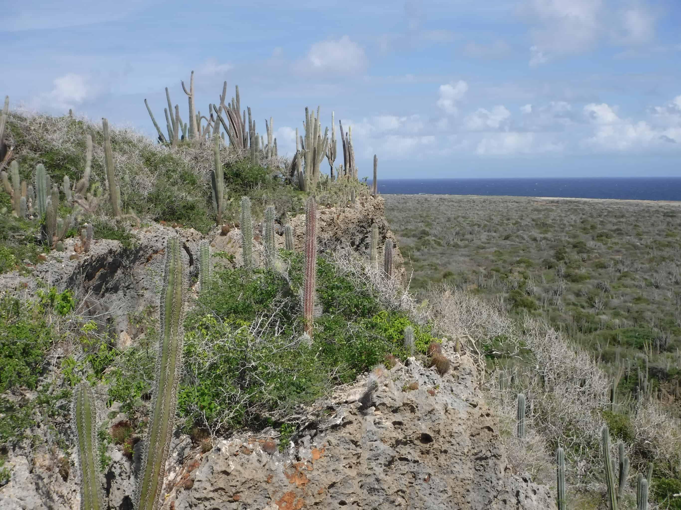 Curacao Island Experience- Jeep Safari Curaao East 5