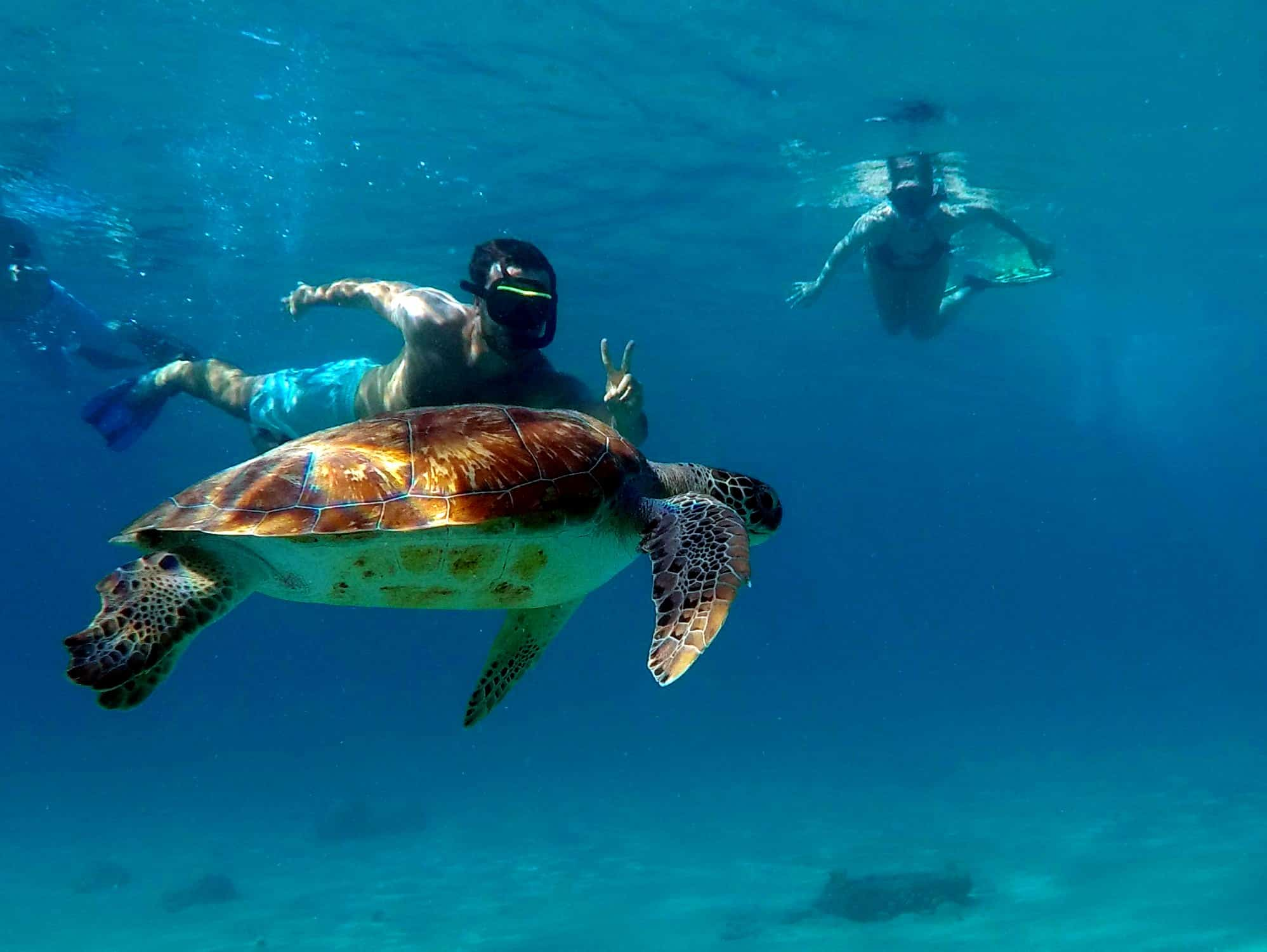 Catamaran Blue C Westpunt Sailing Curacao- Sea Turtle Playa Piskado