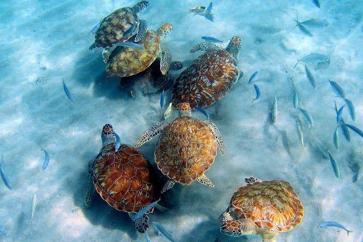 Curacao Beach Hopping - Sea Turtles- Irie Tours 6